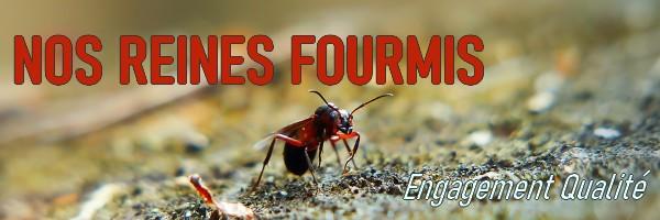 Découvrez nos fourmilières et nos aires de chasse prochainement